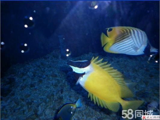 动物极地馆,海底世界,水下剧场,世界最大的贺柱缸,国内最大的鲨鱼馆